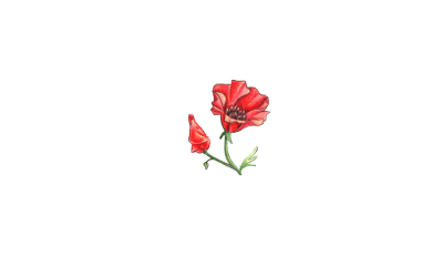 Welcome to Wild Poppy Florist