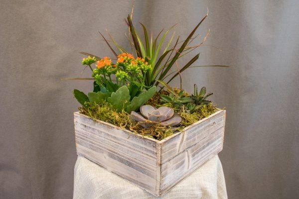 Succulent Dish Garden - $59.00