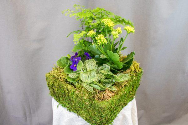 Flower Dish Garden - $49.00